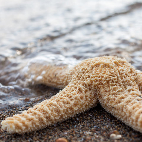 Starfish Art Print, Beach Decor