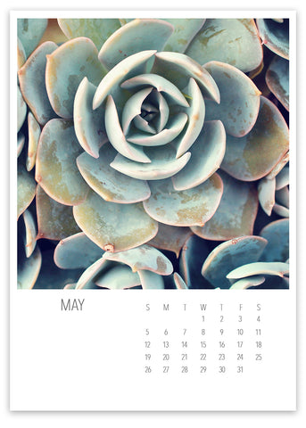 2019 Succulent & Cacti 5x7 Desk Calendar - april bern photography