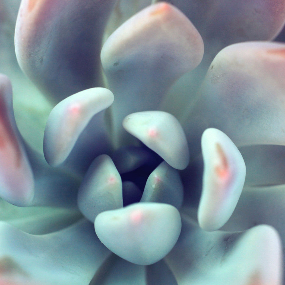 Succulent Fine Art Photography - april bern photography