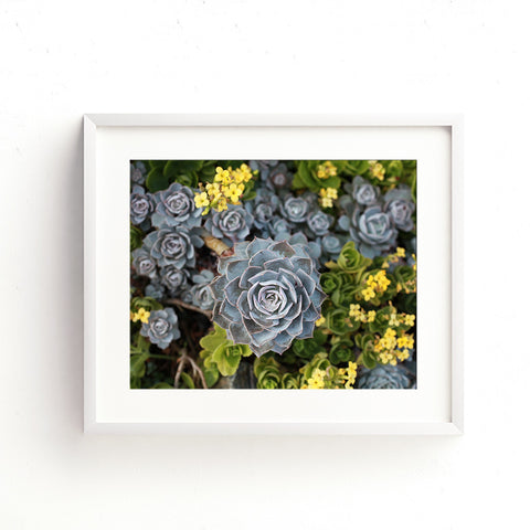 Digital Download - Succulent Garden