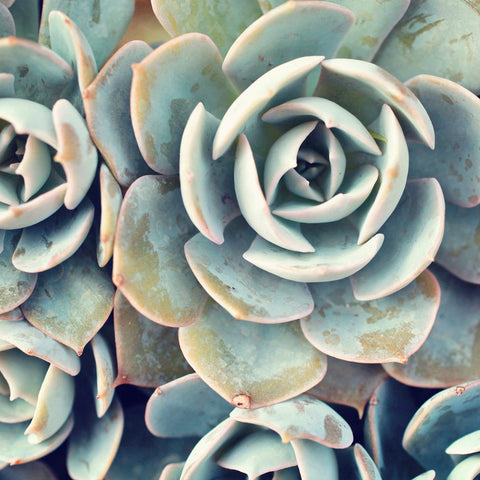 Succulent Photograph, Succulent Wall Decor
