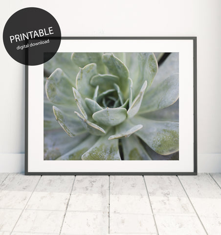 Instant Download - Pastel Succulent Printable Art