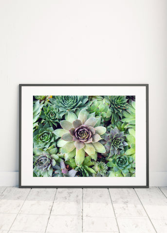 Printable Art - Succulent Garden Instant Download - april bern photography