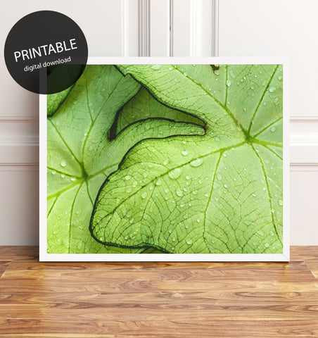Tropical Leaves Printable Art