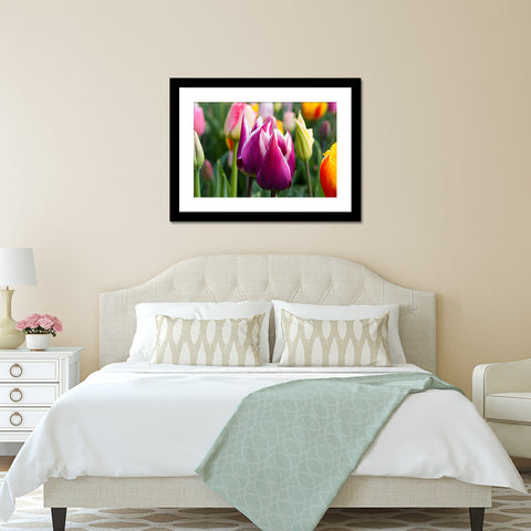 Tulip Fine Art Photography, Spring Floral Home Decor - april bern photography