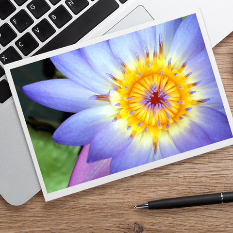 Waterlily Photo Notecard, Blank Greeting Card - april bern photography