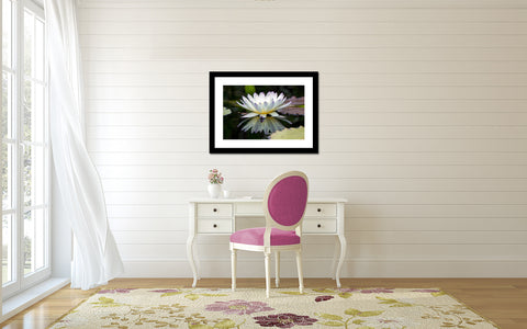Water Lily Fine Art Print - april bern photography