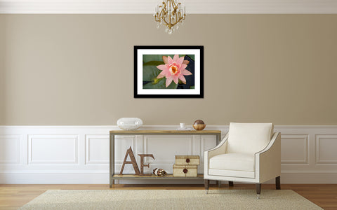 Waterlily Fine Art Photography - april bern photography