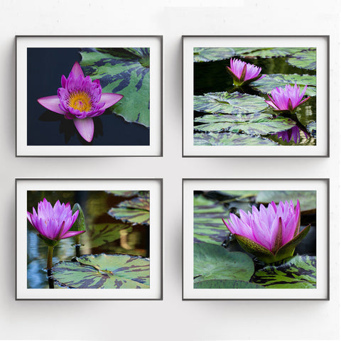 Waterlily Garden -  Set of 4 Waterlily Art Prints