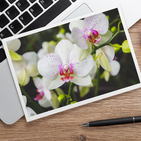 White Orchid Photo Notecard, Orchid Stationary