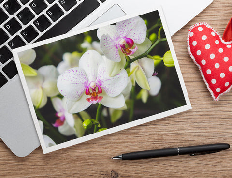 White Orchid Photo Notecard, Orchid Stationary - april bern art & photography