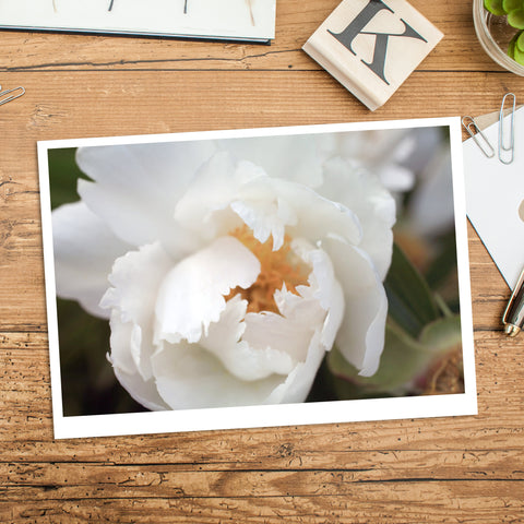 White Peony Photo Notecard, Floral Stationary