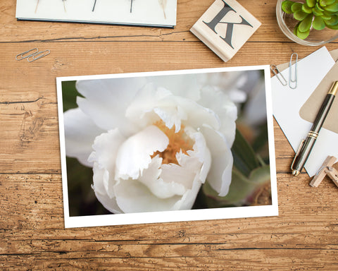 White Peony Photo Notecard, Floral Stationary - april bern photography
