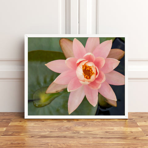 Waterlily Fine Art Photography