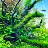 ADA AQUASKY G 451 for W45cm tank