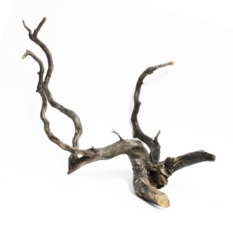 Forest Black Wood