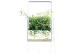 ADA AQUASKY 301 High Type for W30cm tank