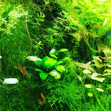 ADA AQUASKY G 301 for W30cm tank