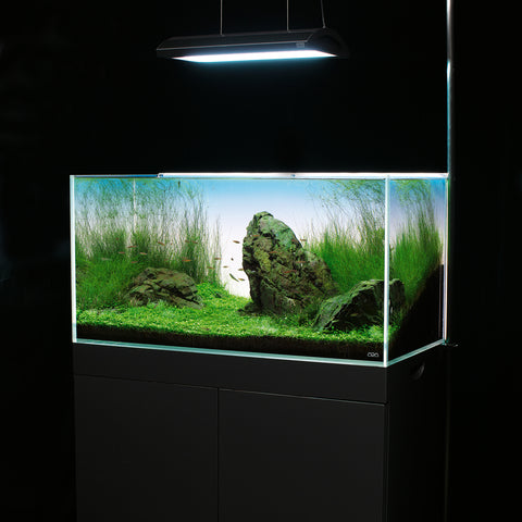 ADA LIGHT SCREEN