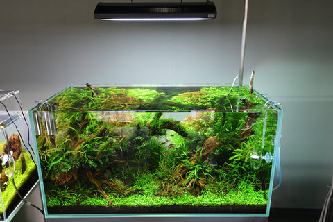 ... ADA Solar RGB LED lighting system (130W) ... & ADA Solar RGB LED lighting system (130W) u2013 Aqua Forest Aquarium