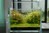 ADA Cube Garden Mini M Aquarium (Ultra High Clarity Glass)