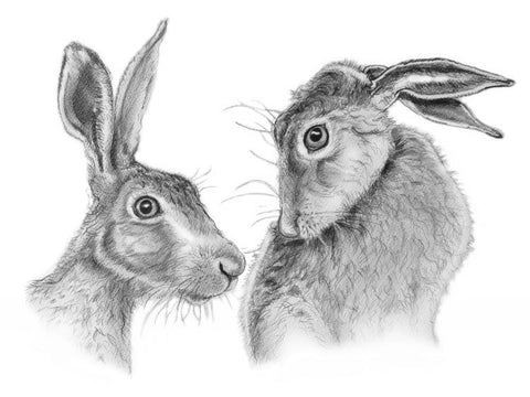 Shy Hares - Giclee on paper by Al Hayball