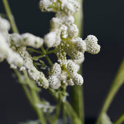 Flower, Gypsophila, White - Artificial