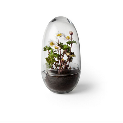 Grow Greenhouse in Glass - Large - Blabar