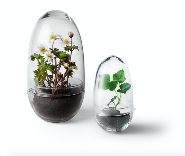 Grow Greenhouse in Glass - Small - Blabar