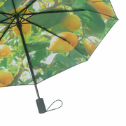 Umbrella Lemon - Blabar