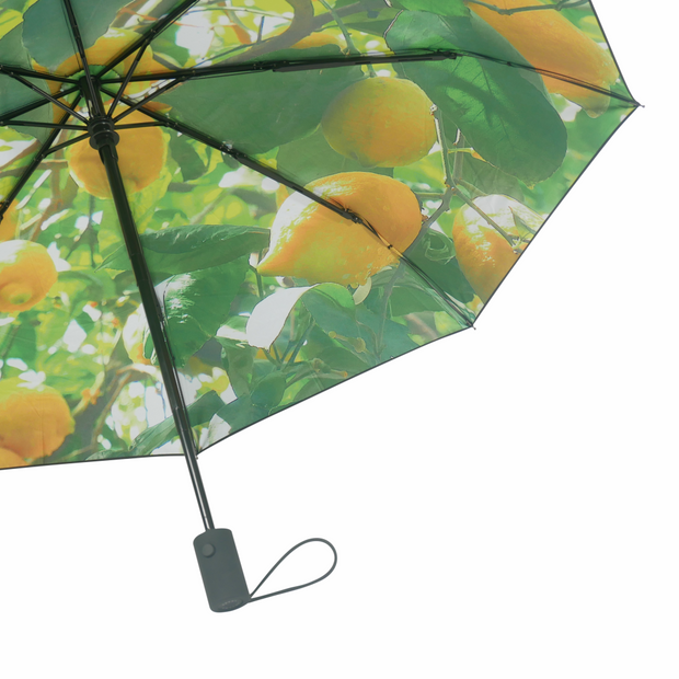 Umbrella Lemon