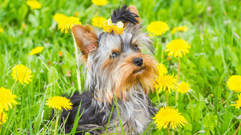 How to Control the Root Cause of Flea and Tick Infestation