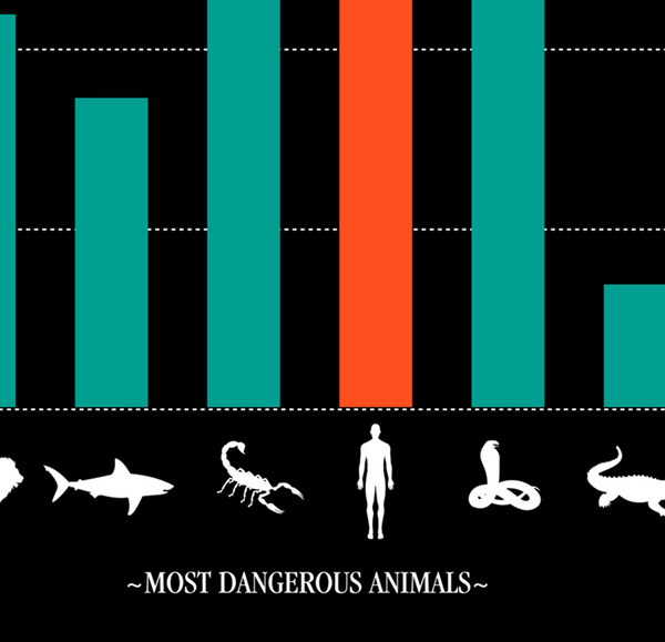 Most Dangerous Animals - Art Print