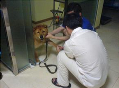 dog getting ready for surgery guide
