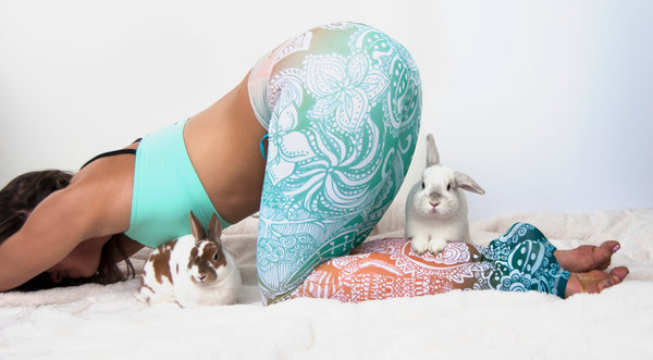 Yoga with Baby Animals...The Best Anti-Stress Therapy on the Market