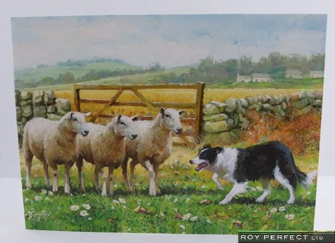 Collie & Sheep Greetings Card - Roy Perfect LTD Gifts