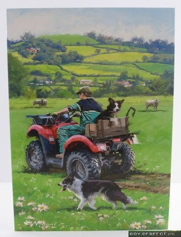 Checking the Sheep Greetings Card - Roy Perfect LTD Gifts