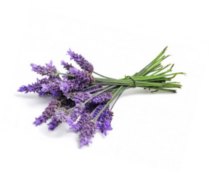 Gift of Lavender