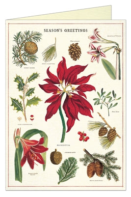 Christmas Botanica Greeting Card - Belle De Provence