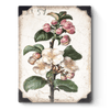 Sid Dickens - T462 Apple Blossom - Belle De Provence