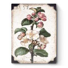 Sid Dickens - T462 Apple Blossom