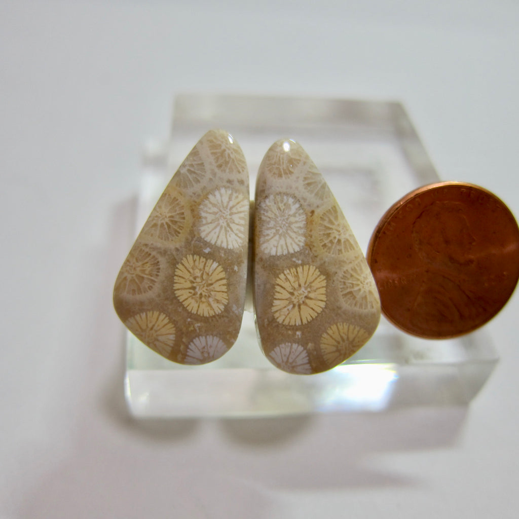 Fossil Coral Pair Y 238
