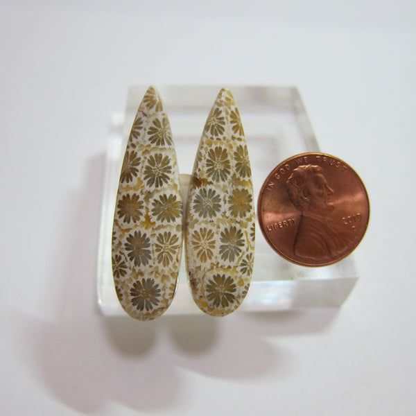 Fossil Coral Pair Y 232