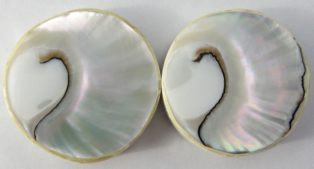 Nautilus Shell Beads