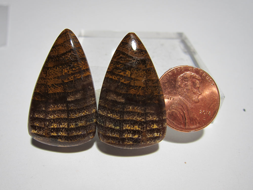 Fossil Oak Pair Y 179