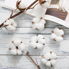 65Pcs/lot Natural Real dried flower Cotton heads wreath decoration DIY supplies, Decor Gifts