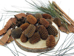 LOOSE PARTS PACK - Sheoak Tree Nuts