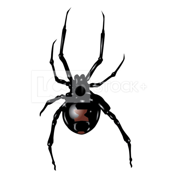Black Widow Spider Vector Clipart