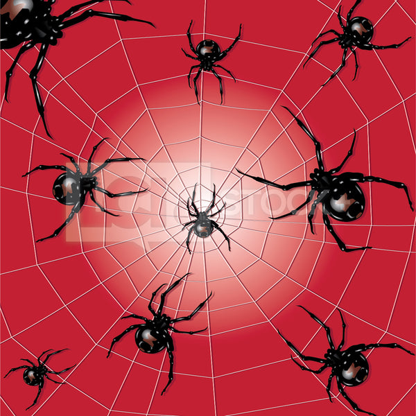 Black Widow Spiders In A Web Vector Clipart