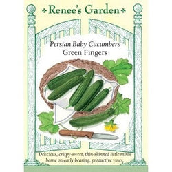 Renee's Garden Baby Persian Green Fingers Cucumber - Cucumbers - Rogue Hydro - 1